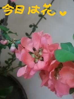 IMG_20180409_075308.jpg
